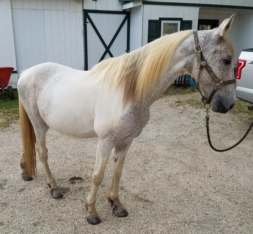 Available Horses - GAIT, Inc
